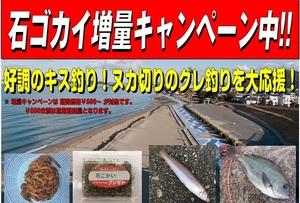 2019.石ゴカイ増量キャンペーン.jpg